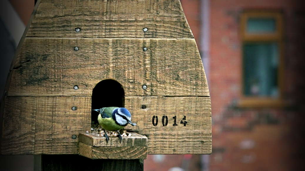 blue tit feeder_fotor_sunflower